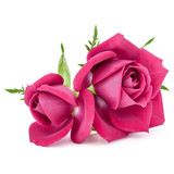 pink rose flower bouquet isolated on white background cutout - 169342845