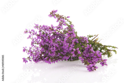 Purple Heath flowers