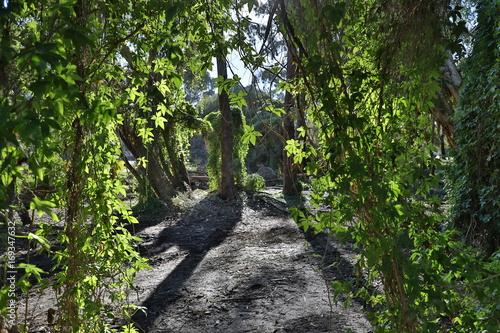 Papiers peints Route dans la forêt Perth Secret Garden Hanging Vines