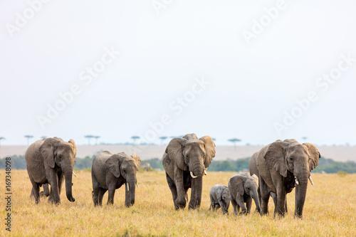 Fotobehang Natuur Elephants in Africa