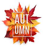 Autumn leaf poster with fall season foliage - 169353043