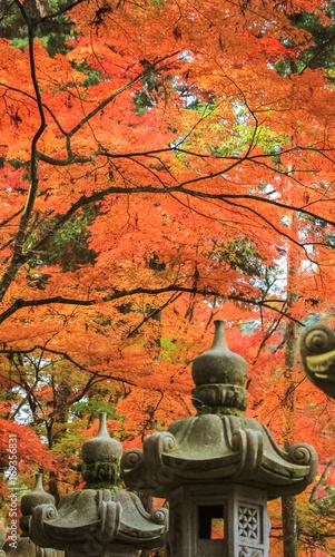 Fotobehang Koraal 紅葉と灯篭