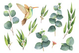 Watercolor vector hand painted set with eucalyptus leaves and Hummingbird. - 169373275