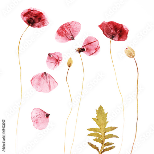 Pressed and dried poppies flower background - 169402007