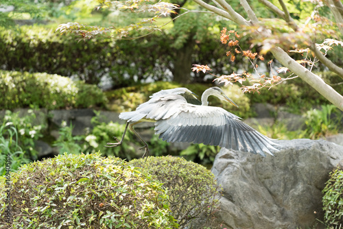 Aluminium Kyoto Grey Heron at Toji Temple in Kyoto