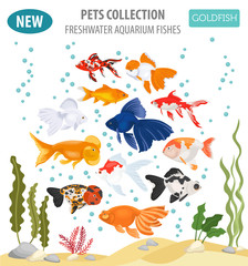 Freshwater aquarium fishes breeds icon set flat style isolated on white. Goldfish. Create own infographic about pets