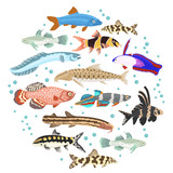 Freshwater aquarium fishes breeds icon set flat style isolated on white. Loaches, gobies, killifishes. Create own infographic about pets - 169434251