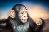 Cute baby chimpanzee - 169437206