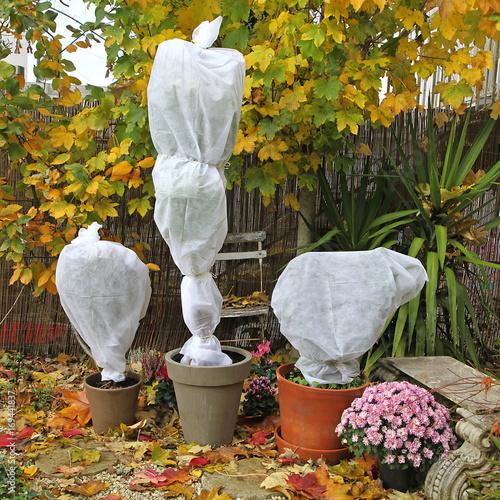 Fotobehang Zeilen Voile d'hivernage sur plantes en pots