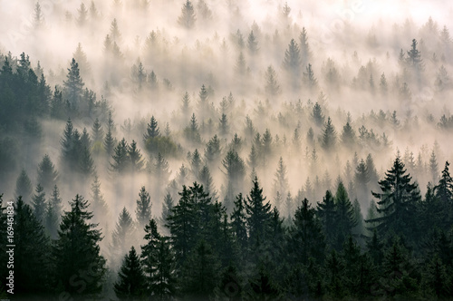 Misty forest - 169461834