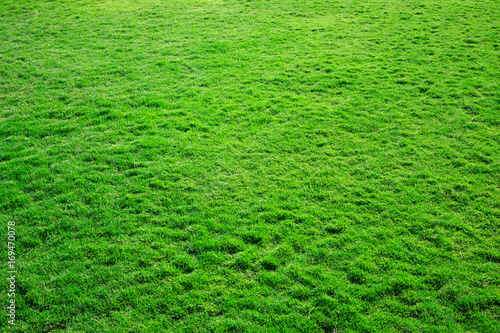 Foto op Canvas Gras grass texture from a field