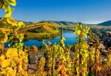 Farbenfrohe Herbststimmung im Moseltal - 169475688