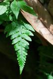 Fern with Brown Leaf