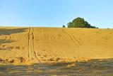 Paesaggio con campo di grano.