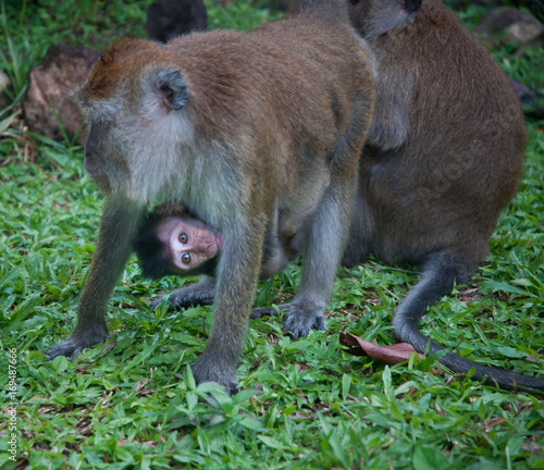 Aluminium Aap baby monkey being carried