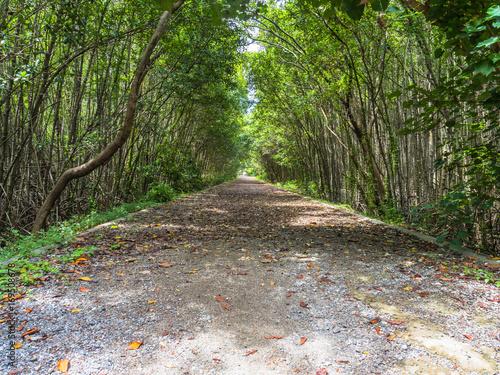 Papiers peints Route dans la forêt Mangrove forest in Thailand.