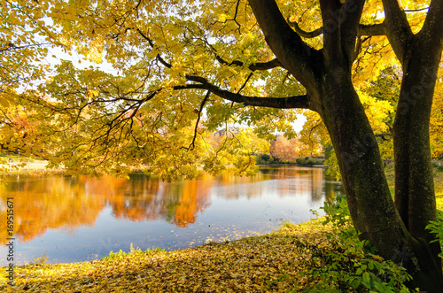 Papiers peints Miel Meditation, Relaxation, Silence, Free Time: Wonderful day in autumn with colorful trees at a silent lake :)