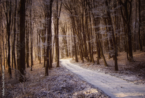 Papiers peints Cappuccino snowy forest road in winter