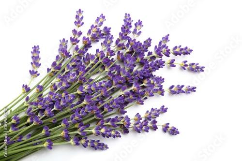 Lavender. - 169568010