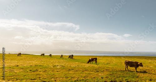 Fotobehang Donkergrijs farmland