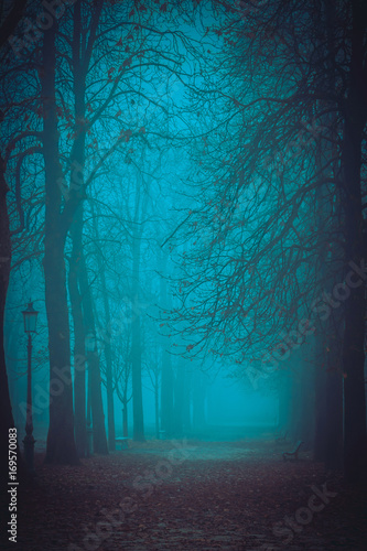 Walkway in misty park. Autumn nature landscape. Poster
