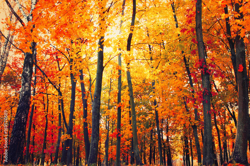 In de dag Oranje eclat Autumn park. Nature landscape background.