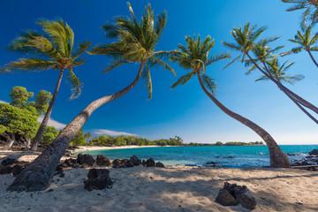Group of Coconut Palm Trees at a Sandy Beach, Big Island, Hawaii