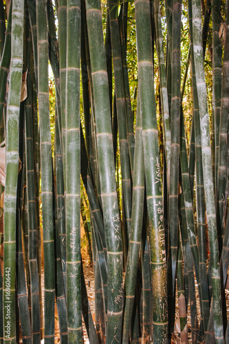 Fotobehang Bamboe Marokko