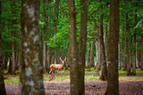 Wild deers in mixed pine and deciduous forest - 169614025