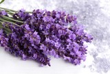 Lavender. - 169615849