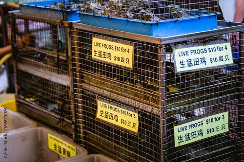 Fotobehang Kikker Cage full of frogs for sale