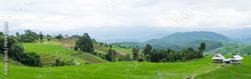 Aluminium Rijstvelden panorama view of home and green terraced rice field with mist on morning in Pa Bong Pieng, Chiang Mai, Thailand.