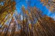 Poplars up High