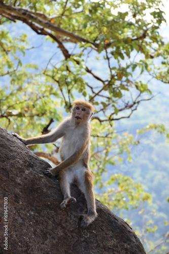 Aluminium Aap Affen im Baum