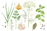 Watercolor herbs and spices - 169664281