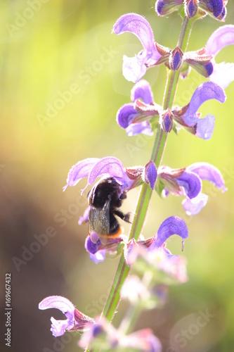 Aluminium Iris violet