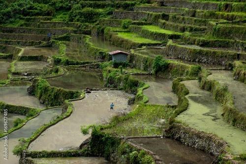 Fotobehang Pistache landscape