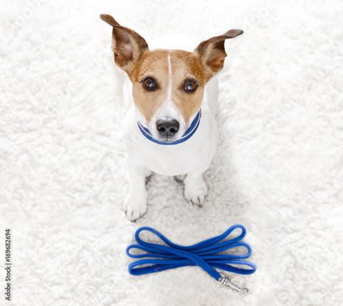 Fotobehang Crazy dog dog with leash waits for a walk
