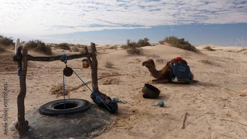 Fotobehang Kameel Wüstenschiff
