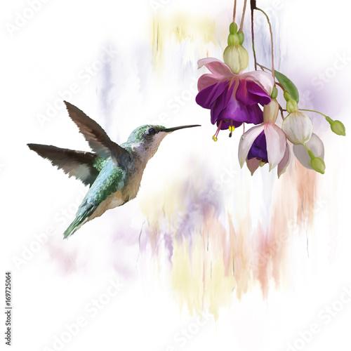 hummingbird-i-kwiaty-akwarela
