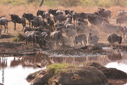 Fotobehang Cappuccino Africa Living