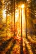Goldener Herbstwald im Sonnenlicht