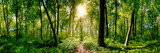 Path in the forest lit by golden sun rays - 169753423