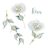 Hand drawn watercolor set with delicate white roses and branch - 169759055