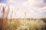 Golden field of grasses - 169760402