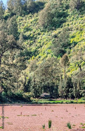 Fotobehang Lichtroze The parched lake in the village of Ranu Pani. Bromo Tengger Semeru National Park. Indonesia