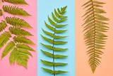 Fashion Tropical Floral Leaves Concept. Design. Art Gallery. Minimal. Green Tropical Fern Leaves. Autumn fashion. Pastel colors - 169790010