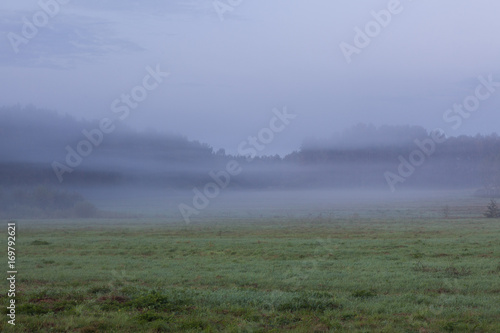 Fotobehang Khaki Foggy grassland at dawn