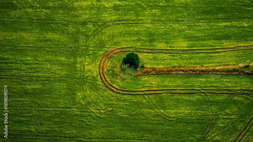 Papiers peints Vert Aerial view of the vegetable field from drone