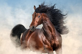Bay stallion with long mane run fast in desert dust  - 169815419
